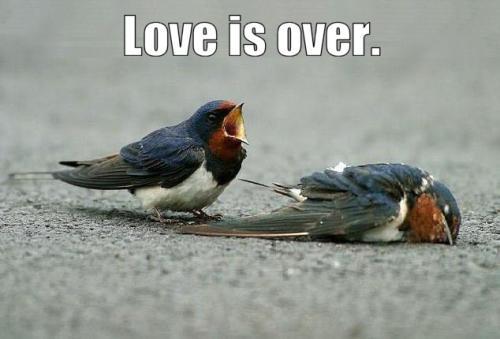 loveisover