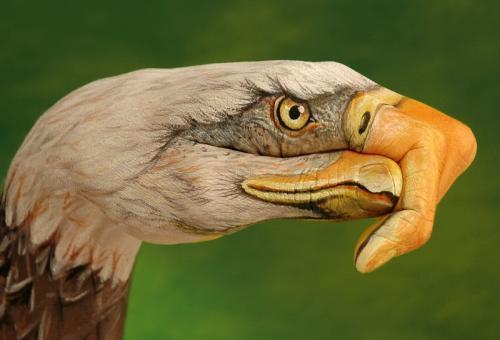 hand-eagle-3.jpg