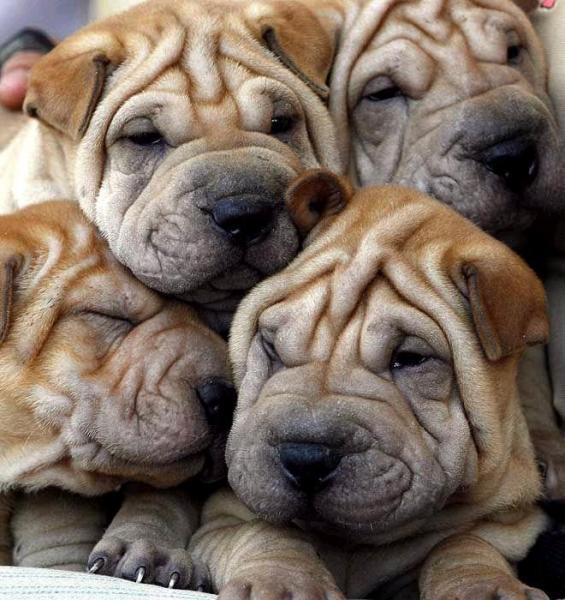 pile-of-puppies.jpg