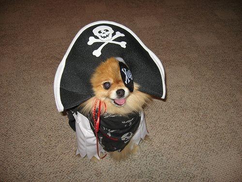 pirate-dog.jpg