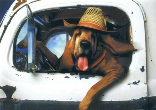 red-neck-dog.jpg