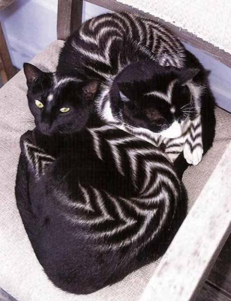 zebra-cats.jpg