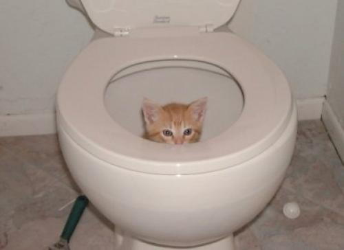 shit-cat