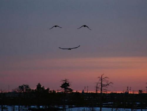 birds-of-bliss
