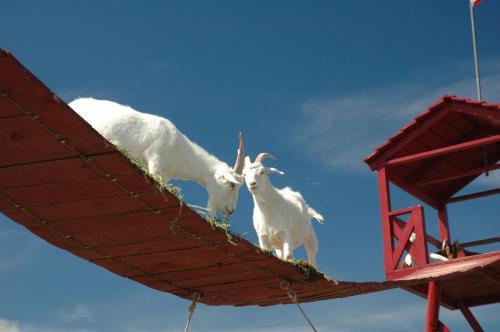 goat-bridge.jpg