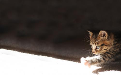 kitten-light.jpg