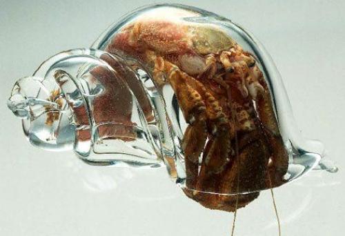glass-hermit-crab.jpg