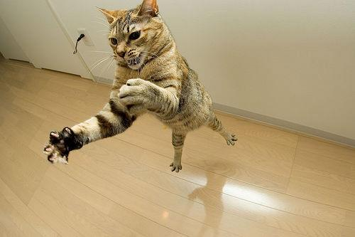 flying-kitty.jpg