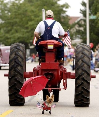 Cute Tractor Dog