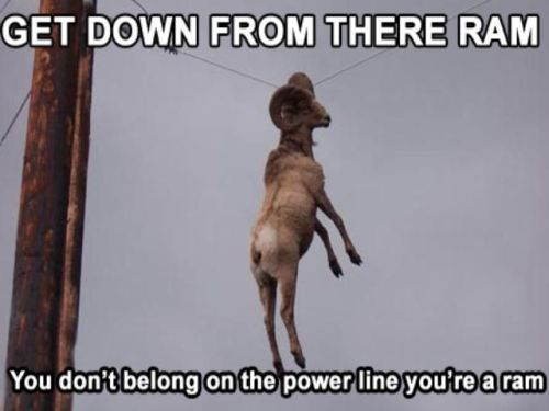 Get down from there Ram