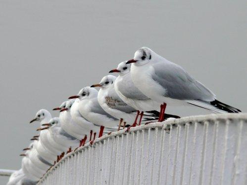 Birds on a rail