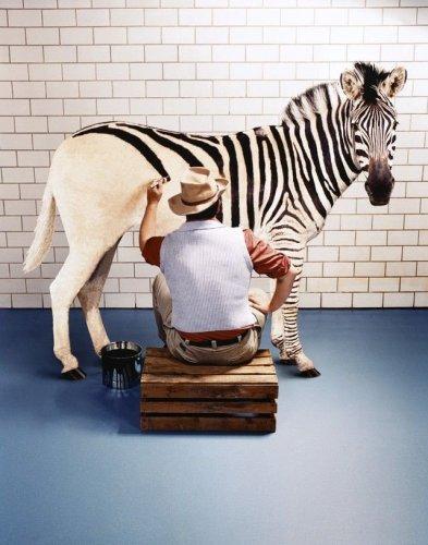 Zebra painter