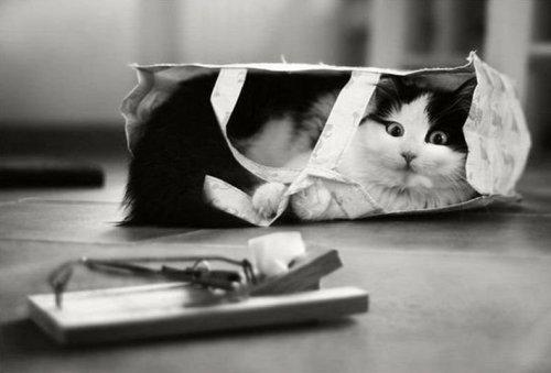 Cat Vs Mouse trap