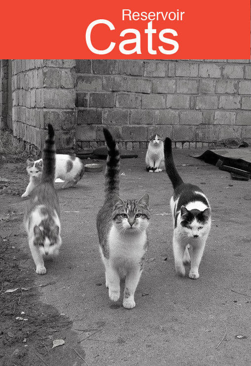 reservoir-cats