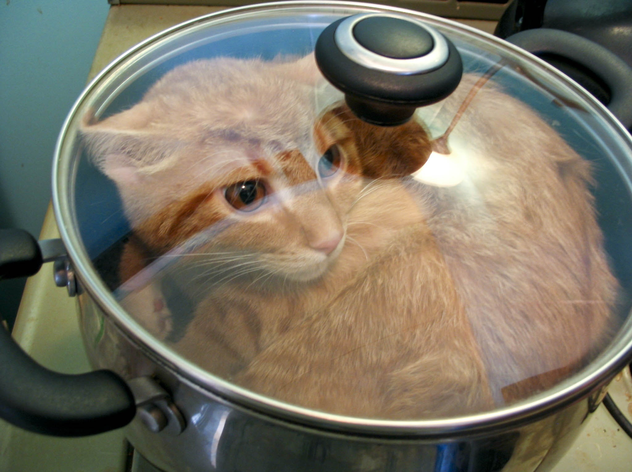 Image result for cat on a stove