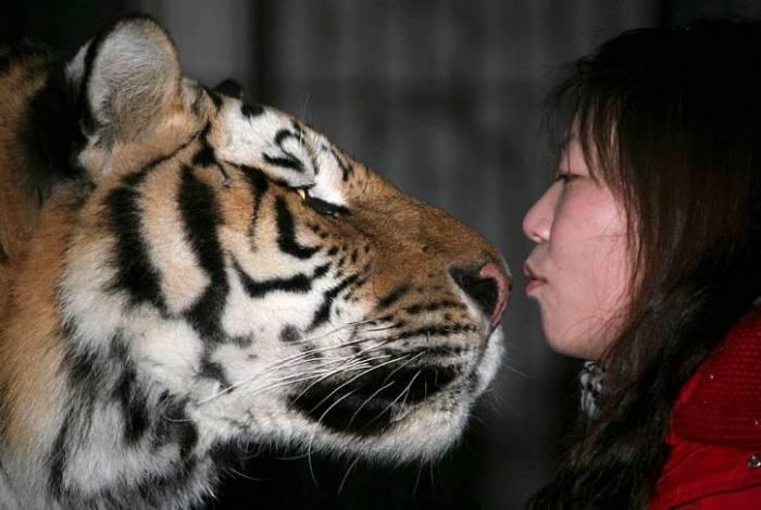 kitty kisser