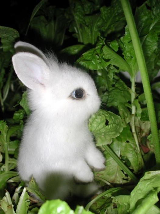 bunny in greens