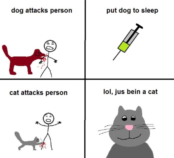 cat attacks person