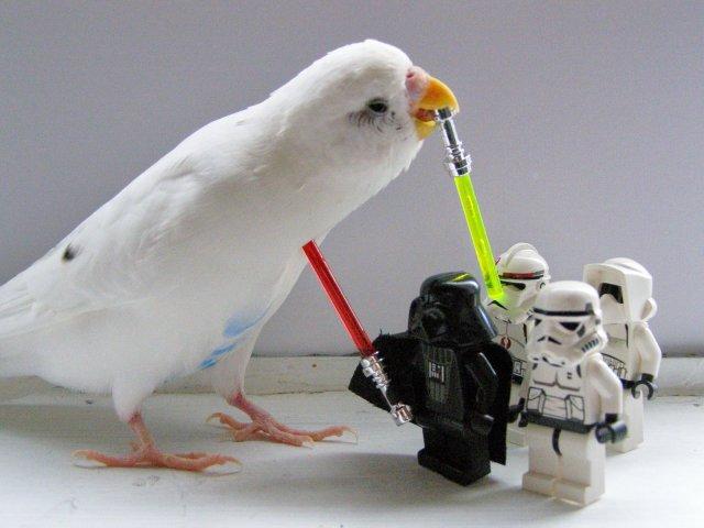 jedi parrot