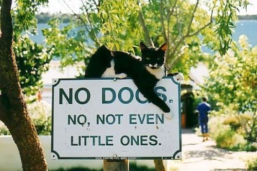 no dogs - no not even little ones