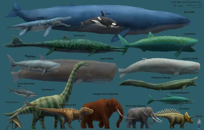 animal sizes.jpg