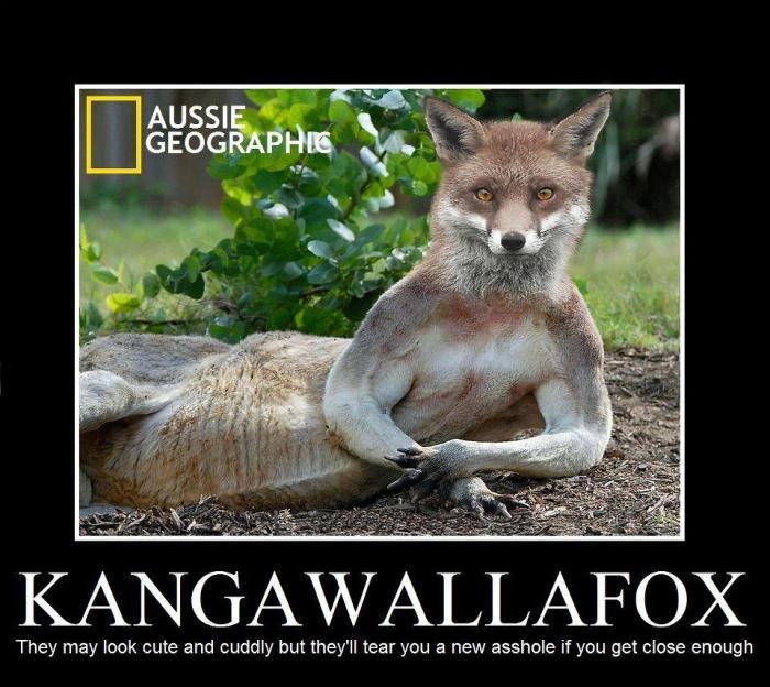 kangawallafox.jpg