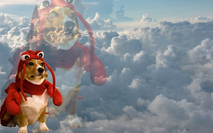lobster dog in the clouds.jpg