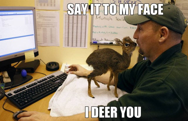 say it to my face - I deer you.jpg