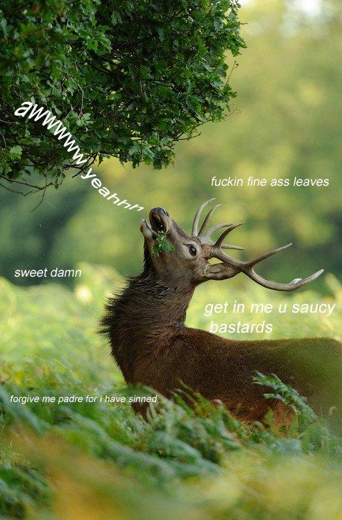 saucey deer.jpg