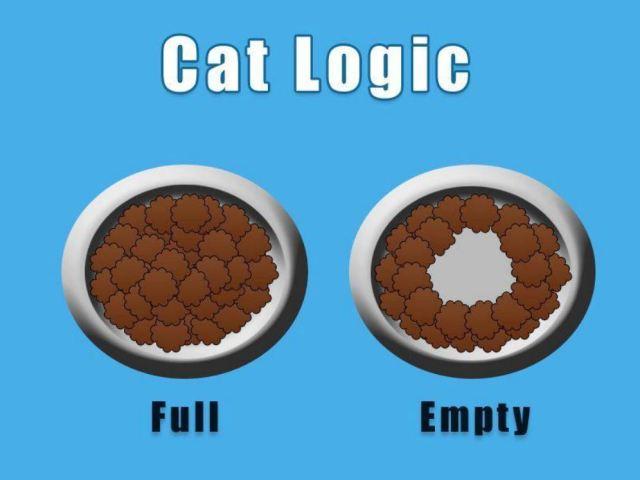 cat logic.jpg