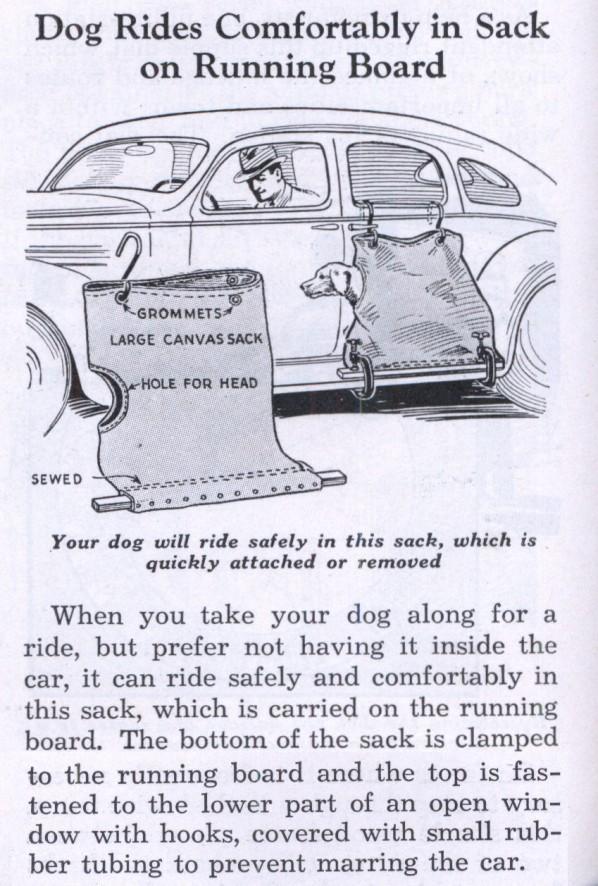 dog carrier for car.jpg