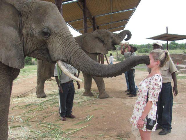 elefant hello.jpg