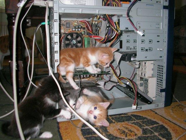 kitten computer techs.jpg