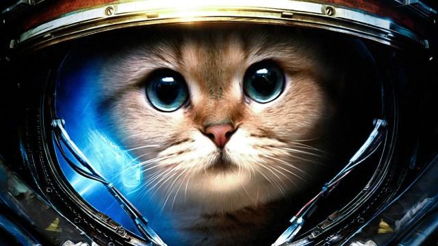 space marine cat.jpg