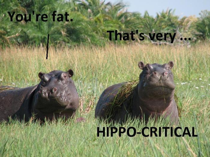 Hippo-critical.jpg