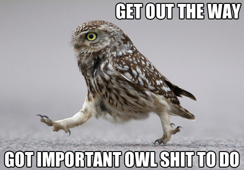 get out of the way - got important owl shit to do.jpg