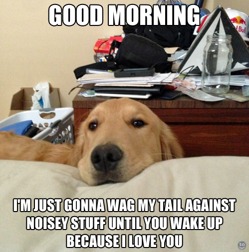 good morning - I'm just gonna way my tail against noisey stuff until you wake up.jpg