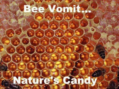 bee vomit - nature's candy.jpg