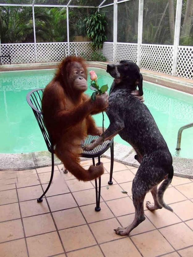 monkey loves dog.jpg