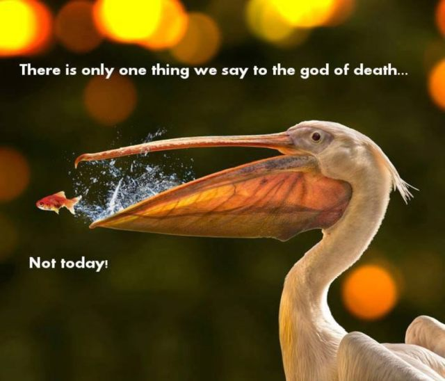 There is only one thing we say to the god of death...NOT TODAY.jpg
