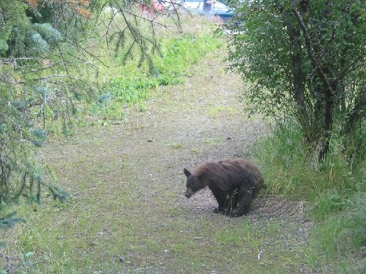 does-a-bear-shit-in-the-woods
