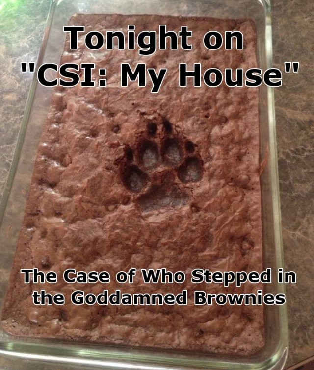 csi - my house - who stepped in the goddamned brownies.jpg