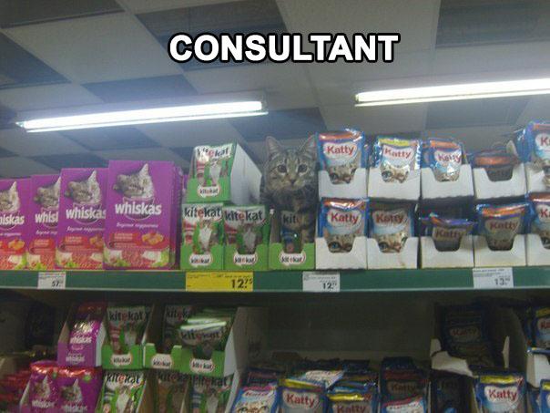 Kit Kat Consultant.jpg
