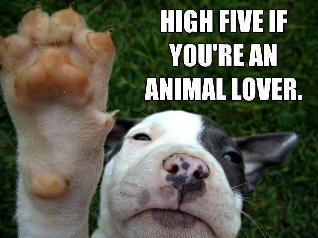 high five if you're an animal lover.jpg