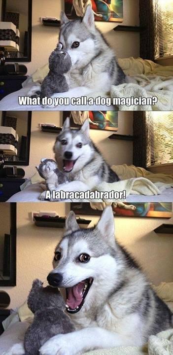what do you call a dog magician.jpg