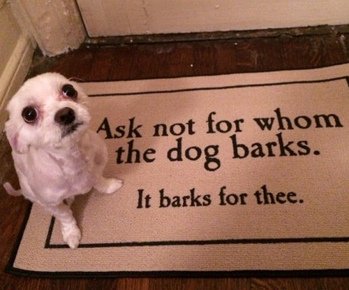 ask not for whom the dog barks.jpg