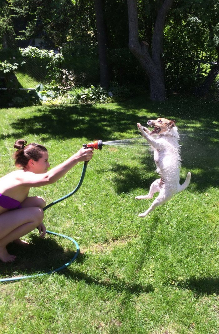 spray dog.jpg