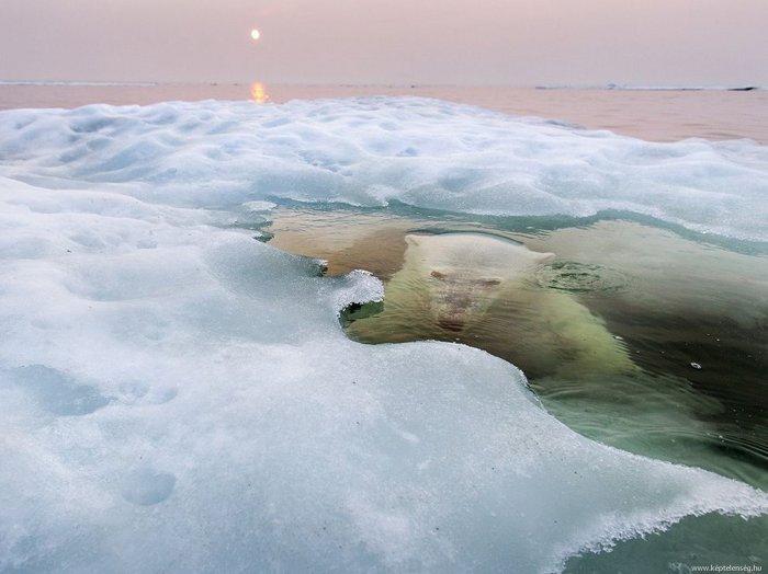 water bear.jpg