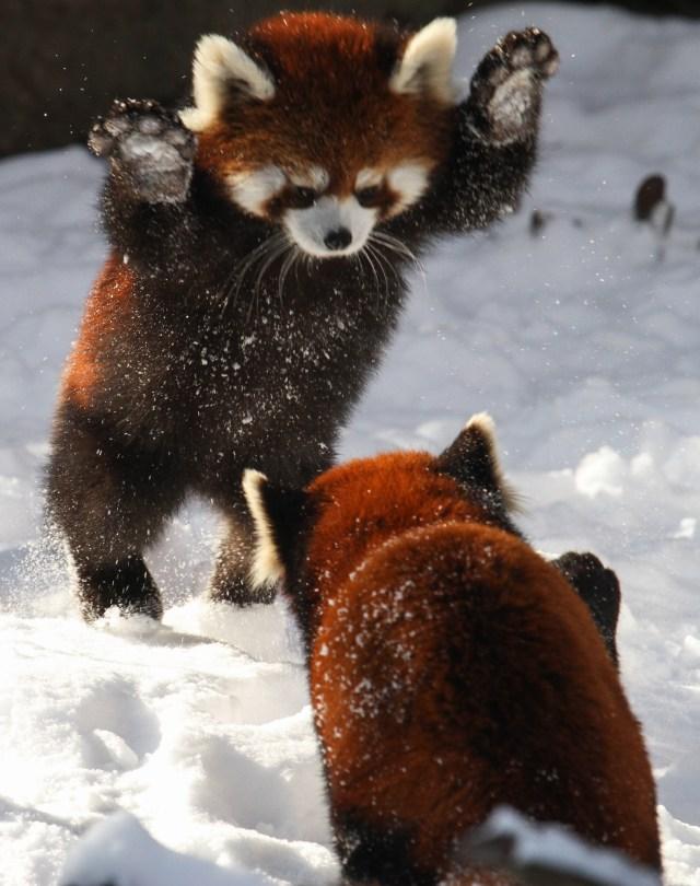 fire panda attack.jpeg