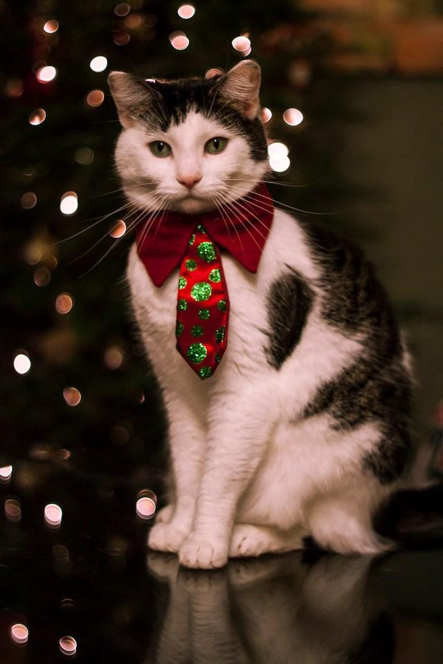 Party Cat in a tie.jpg